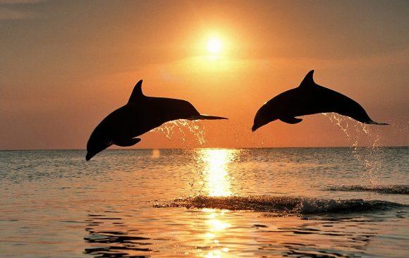 La Sinfonía de Los Delfines